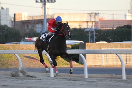 9R勝ち馬 5トーホウペガサス