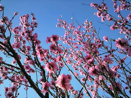 桜―2011/4/193