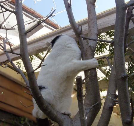 木登りcyomi2