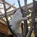 写真: 木登りcyomi2