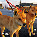 Photos: タック_32361