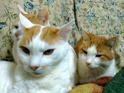 日本魚卵党ネコ代表、モモですにゃ。