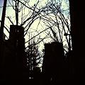 写真: 並木道。