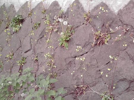 黄色い草花が・・・