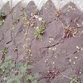 写真: 黄色い草花が・・・