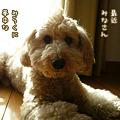 写真: 110125 くーかい of the day 1
