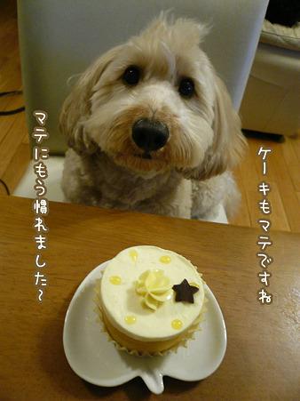 くーかい 3歳の誕生日♪ 9