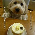 写真: くーかい 3歳の誕生日♪ 9