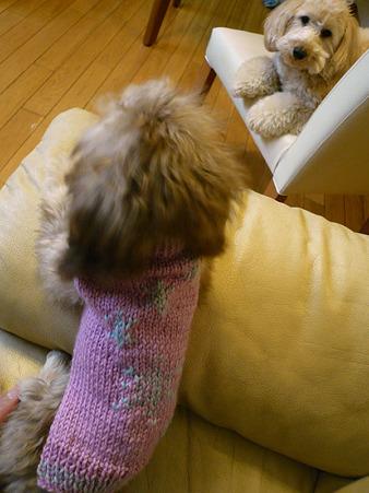 みらくのおニュー手編みセーター 2