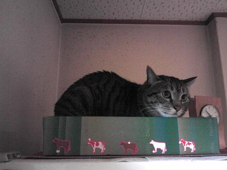 ののちゃん宅の先住猫ちゃん