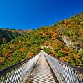 梅の木にあるつり橋