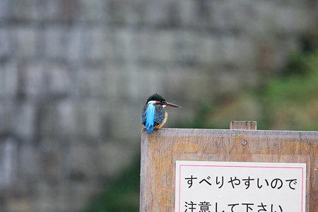 2009.11.23 和泉川 すべりやすいので…