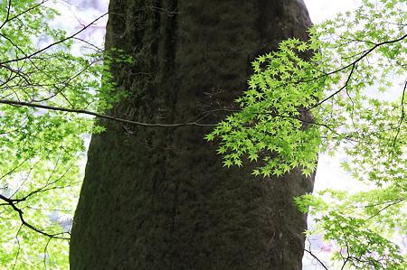 2010.04.30 南禅寺 石碑と紅葉