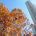 Photos: ビルの谷間の秋も去りゆく。晩秋の西新宿。2008_1114_fpxF710_DSCF1062