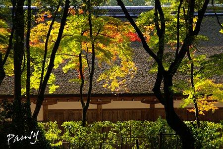 上賀茂神社にて・・9