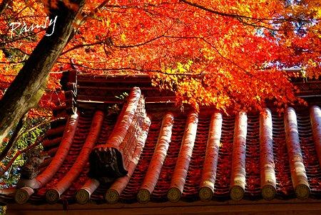 赤く染まる屋根・・