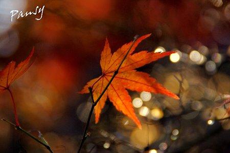 紅い葉揺れて・・