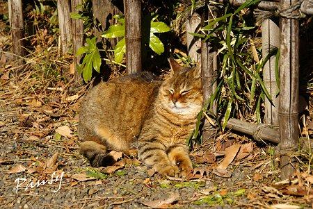 陽だまりで・・三渓園の猫・・