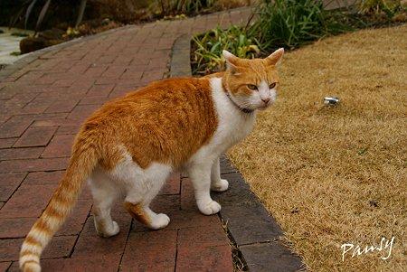 お庭のガイドさん・・石窯ガーデンテラスの猫・・