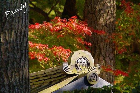 紅葉の三渓園 ・・17