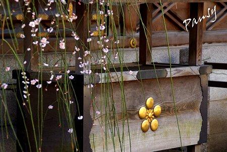 梅の花と・・梅の御紋