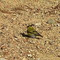Photos: 鳥さん・・・。