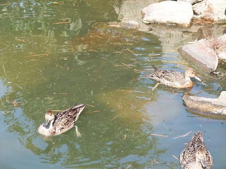 2009年11月8日深山公園06