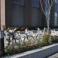 写真: おみくじ自転車2
