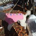 Photos: ピンクのセーターお買い上げ~