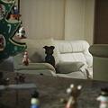 Photos: お、セナの初ソファー!