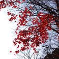 永源寺の秋