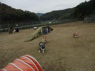 2009_1123岡山にて0055