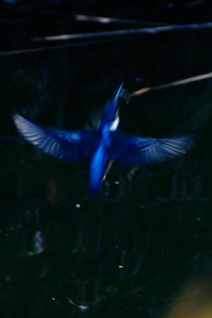 翡翠の飛翔2!(100214)