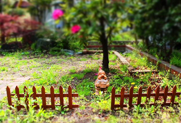 小人さんのお庭