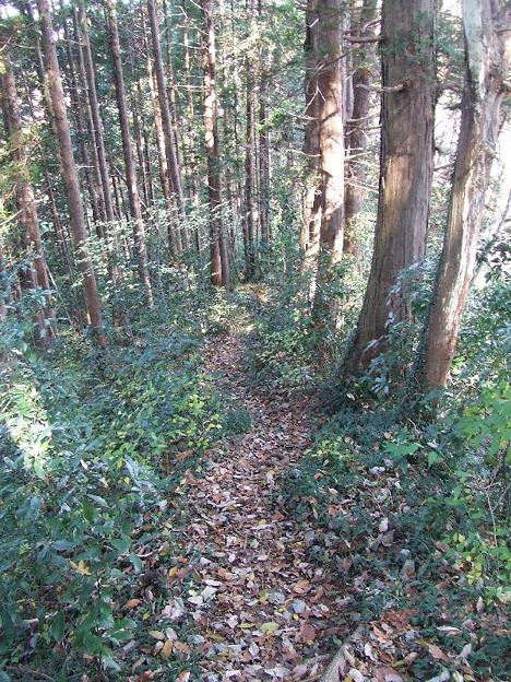 城山から高尾神社シングルトラック