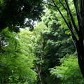 Photos: 木々のスケールに圧倒されつつ