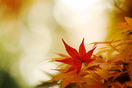 朝陽と紅葉