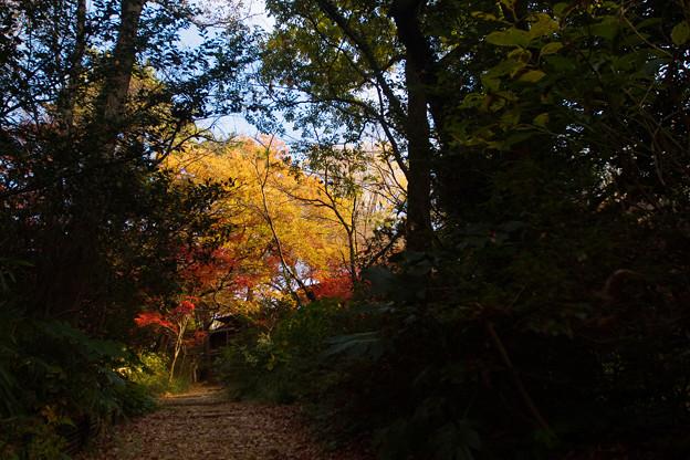 紅葉へ続く道