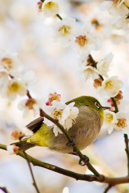 丸々とした小鳥