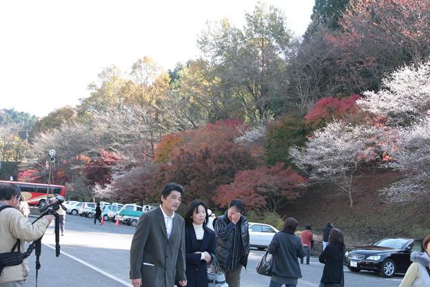 四季桜の里小原