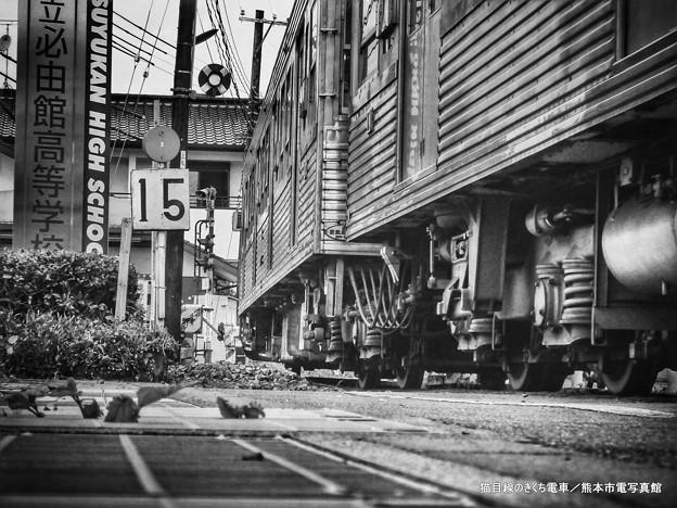 猫目線のきくち電車。