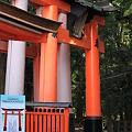 Photos: 千本鳥居の入り口