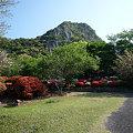 写真: 御船山楽園の春(2)~つつじと御船山