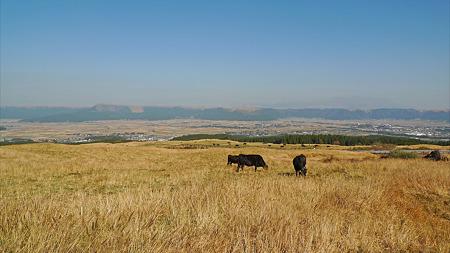 阿蘇の放牧風景(8)阿蘇市と外輪山を見ながら