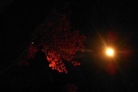 光源と紅葉