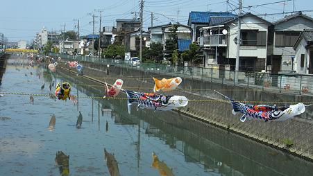 鯉のぼりの遡上