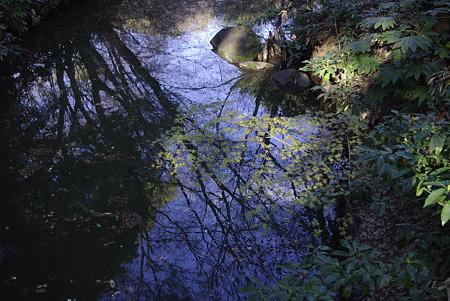 水面に映る青空と木々