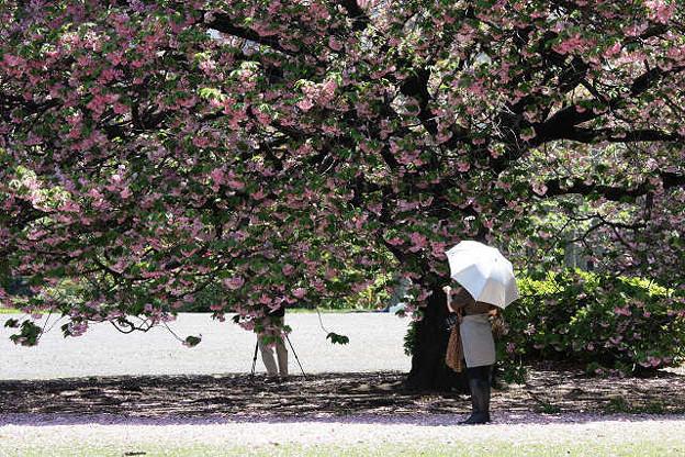 桜の散るを惜しんで・・
