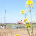 写真: <春のコンチェルト>