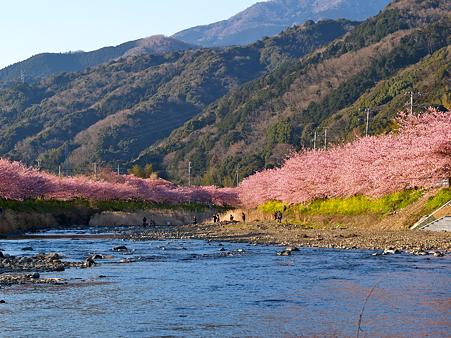 20100227kawatsusakura2